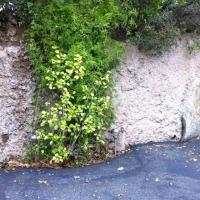 Retaining Wall [ Shotcrete ]