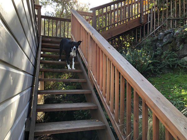 Secret Stairway